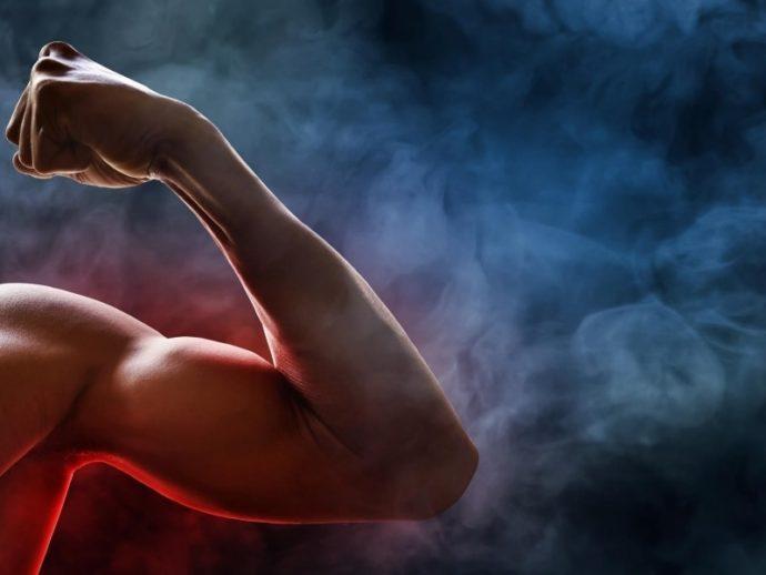 """筋肉のつきやすさには""""胚葉""""が関わっている"""